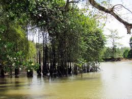 CostaRicaMangrove
